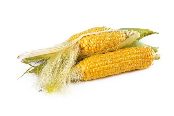 corn-1751321_1920